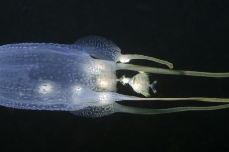 Heat (Not Cold) the Best Option for Treating Jellyfish Stings